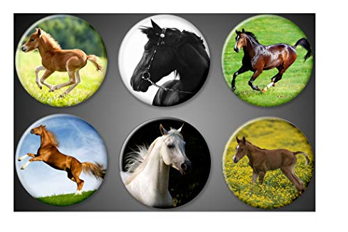 Animal Lover Pin Set - Horses Magnets or Pins set of 6 animal lover Stallion ponies colts Mares Majestic Horse Pinback Collection Jackets lockers (1.75 inches, Magnet)