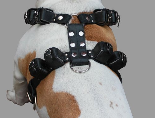 8lbs Black Genuine Leather Weighted Pulling Dog Harness for Exercise and Training. Fits 33''-39'' Chest, by Dogs My Love (Image #1)