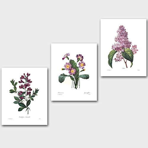 Set of 3 Purple Flower Prints (Lilac Wall Decor Sweet Pea Botanical Art) Redoute Unframed