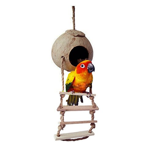 Coconut Shell With Ladder Bird Toy Pet Parrot Macaw African