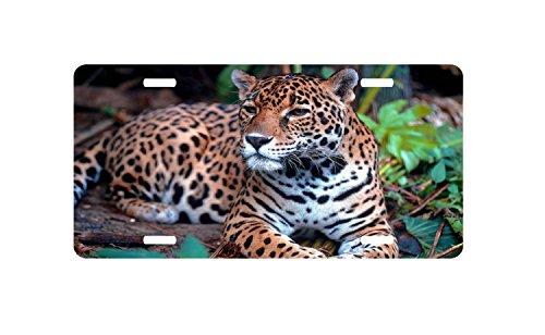 Jaguar, Panther, Leopard License Plate, Animal, Car Tag, Vanity Plate, Auto Tag, Car License Plate. by zaeshe3536658