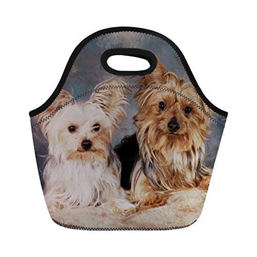 - Showudesigns Neoprene Lunch Tote for Kids Yorkshire Terrier Print Water-resistant Thermal Insulated Lunch Box Bag Tote Zippered for Men Kids Boys School Work Outdoor
