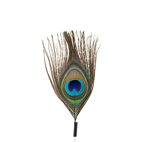 Peacock Eye Skewer, Peacock Feather Eye Pick - 4'', Natural - 500ct Box - Restaurantware by Restaurantware (Image #3)