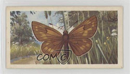 Silver-Spotted Skipper (Trading Card) 1963 Brooke Bond British Butterflies - Tea [Base] #49 ()