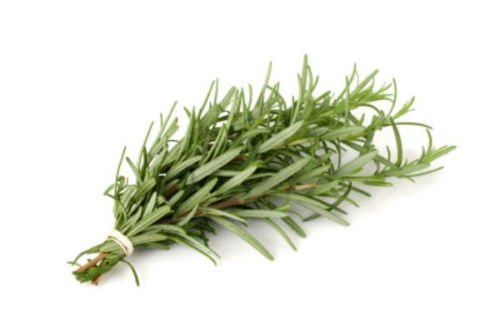 550mg Certified Organic Rosemary Seeds ~400 Seeds Perennial Garden Savory Herb SVI