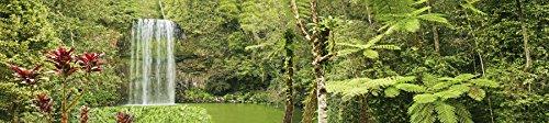 Habitat Cage Reptile (Carolina Custom Cages Reptile Habitat Background; Rain Forest, Waterfall, Red Leaves, for 36Lx18Wx18H Terrarium, 3-sided Wraparound)