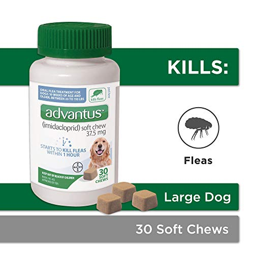 Bayer Animal Health Advantus, Large Dogs 23 - 110 lbs, Soft Chew Flea Treatment, Savory Meat Flavored, Same-As-Vet, 30 daily doses, White/Green - 85274422 (Oral Flea And Tick Protection For Dogs)