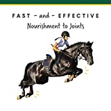 Corta-Flex Equine Joint Supplement | Horse