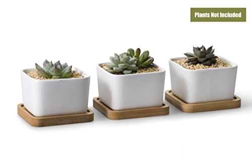 - Opps 3.54 Inch White Ceramic Contemporary Square Design Succulent Plant Pot/Cactus Plant Pot With Bamboo Tray - Pack of 3