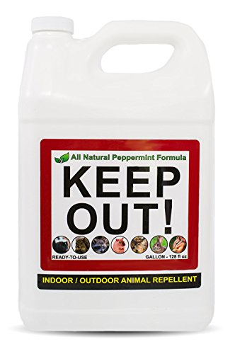 Keep Out! All Natural Indoor Animal Repellent - The Only Animal & Rodent Defense Formula for Indoor Use. A Peppermint Scent Proven to Repel Skunks, Squirrels, Raccoons, Rats, Mice and Critters