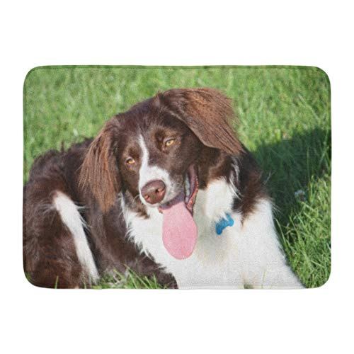 Aabagael Bath Mat Happy Brown Doggy Very Cute Liver and White Collie Cross Springer Spaniel Pet Dog Handsome Mongrel Bathroom Decor Rug 16