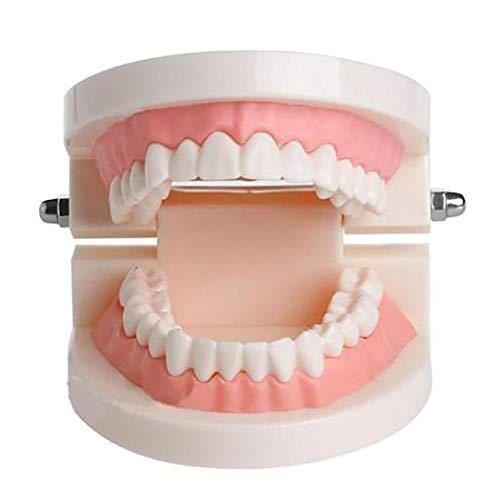 [해외]야이 텐 성인 치아 모델 치과 교육 연구 시연 도구 모델 > 교육 자료 / Yapiten Adult Tooth Model Dental Teaching Training Study Demonstration Tool Models & Educational Materials