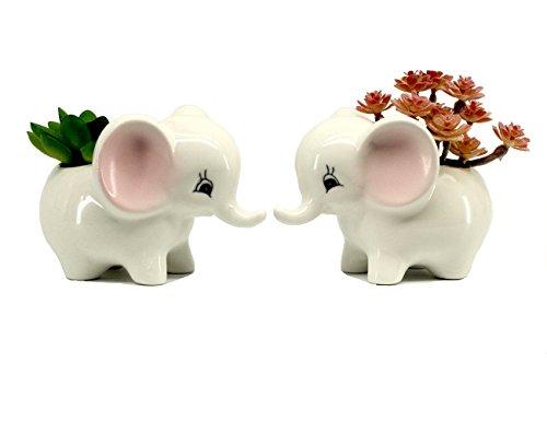 Mecai Cute Elephant Gifts Succulent Planter Modern White Ceramic Flower Pots/Tiny Flower Plant/air Plants Live/Cubicle Office Decor for Desk 2 PCS (Small)