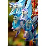 "GREATBIGCANVAS Corydalis flexuosa Poster Print, 12""x18"""