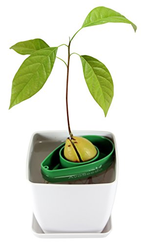 avoseedo-set-with-plant-pot-green-white