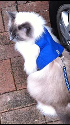 (Mynwood Cat Jacket/Harness Blue Adult Cat)