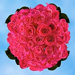 150 Fresh Cut Hot Pink Roses for Valentine's Day | Versilia Roses | Fresh Flowers Express Delivery | The Perfect Valentine's Day Gift