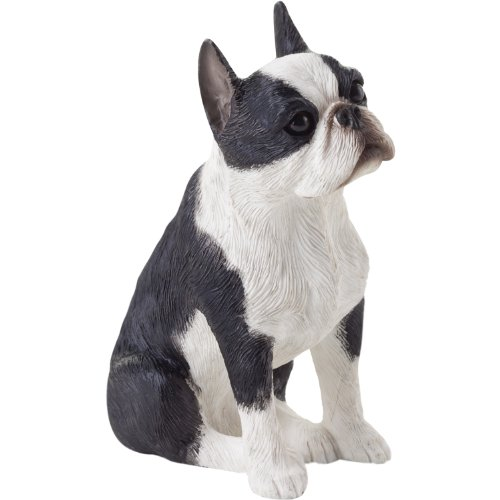 Sandicast Small Size Boston Terrier Sculpture, Sitting