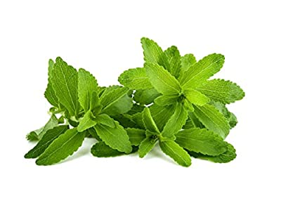 HOT sale! 300 Stevia Seeds, Stevia Herbs Seeds Green Herb, Stevia Rebaudiana Semillas for Garden Planting - 300 particles
