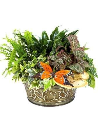 Sympathy Garden - Same Day Sympathy Flowers Delivery - Sympathy Flower - Sympathy Gifts - Send Online Sympathy Plants & Flowers