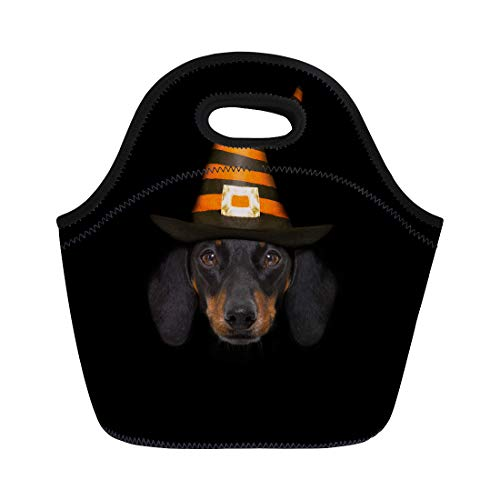 Semtomn Neoprene Lunch Tote Bag Halloween Devil Sausage Dachshund Scared and Frightened Wearing Witch Reusable Cooler Bags Insulated Thermal Picnic Handbag for Travel,School,Outdoors,Work