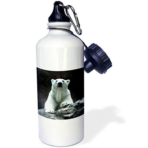 3dRose wb_12207_1 Polar Bear Resting - Sports Water Bottle, 21 oz, ()