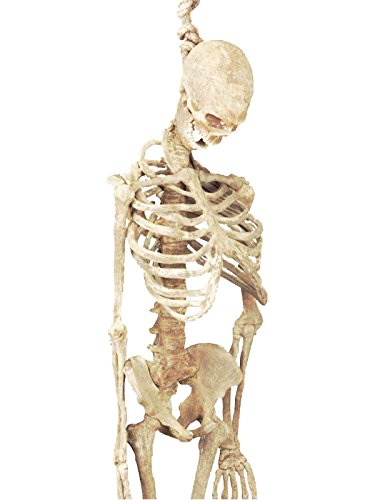 Forum Novelties Halloween Skeleton Full Body Latex Skeleton, 5-Feet, Bone