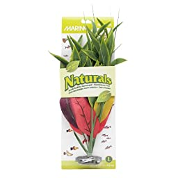Marina Naturals Dracena Silk Plant, Large, Red/Yellow