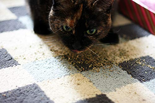 Meowijuana Paw Natural OG - Premium Ground Catnip - Your Feline Will FLIP for This 'Nip - Cat and Kitty Approved!
