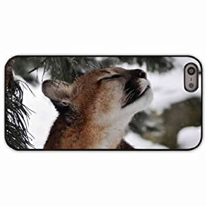 iPhone 5 5S Black Hardshell Case cougar wild muzzle Desin Images Protector Back Cover