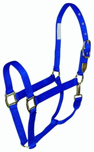Hamilton Deluxe 1-Inch Nylon Horse Halter with Snap, Blue, Average