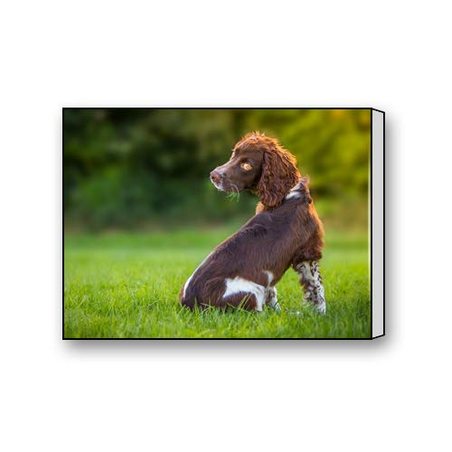 Flipped Summer Sussex Spaniel Puppy Custom Canvas Prints for Living Room Bedroom Home Office Decor 10