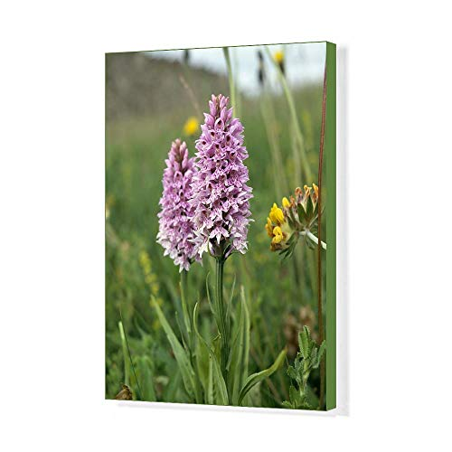 Media Storehouse 20x16 Canvas Print of Common Spotted Orchid K991351 ()