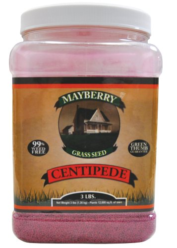 (Mayberry Centipede Seed, 3-Pound)