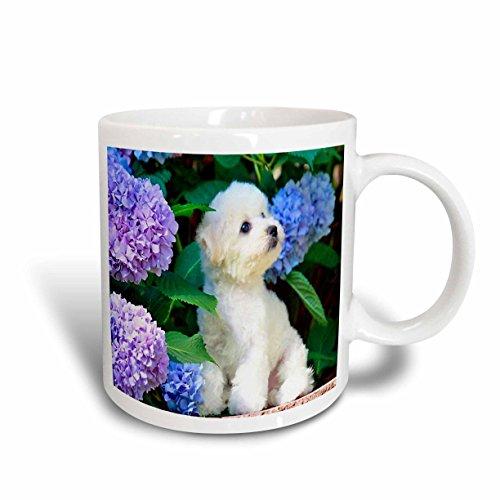 3dRose Adorable Bichon Frise Puppy Among Hydrangeas Ceram...