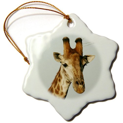 3dRose orn_20123_1 South African Giraffe Head Face Sky Background Porcelain Snowflake Ornament, 3-Inch