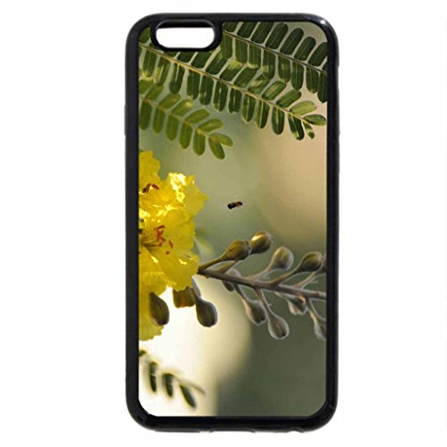 iPhone 6S / iPhone 6 Case (Black) Beautiful Acacia Flowers