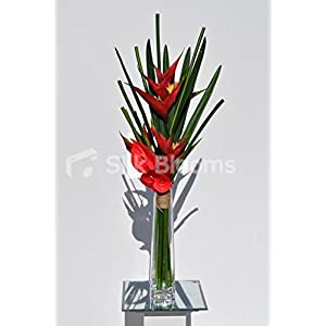 Tropical Red Bird of Paradise and Anthurium Floral Table Display 12