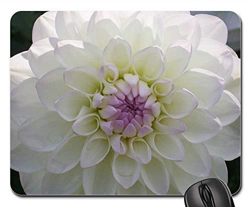 Growing Dahlia Flowers - Mouse Pad - Dahlia Flower Bloom Blossom Petals Floral Macro