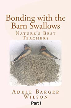 how to keep barn swallows from building nest on porch