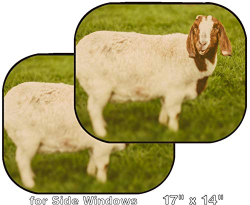 MSD Car Sun Shade - Side Window Sunshade Universal Fit 2 Pack - Block Sun Glare, UV and Heat for Baby and Pet - Image ID: 34232218 Goat on a Green Grass as Sign of 2015 Year by Chinese Calendar V
