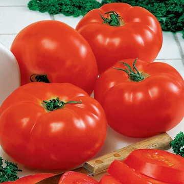 Big Beef (Park Seed Big Beef Hybrid Tomato Seeds)