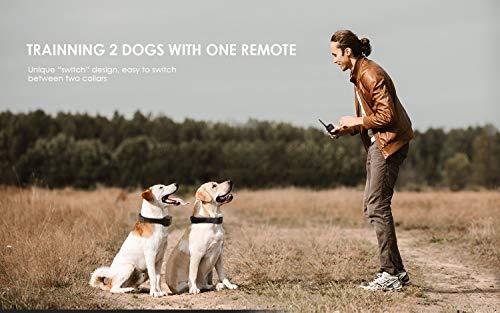 Buy shock collar for dog training