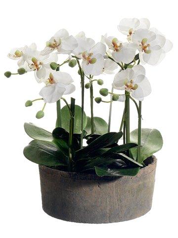Phalaenopsis Silk Orchid Plant Cream (19