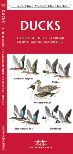 Ducks: A Field Guide to Familiar North American Species (Pocket Naturalist Guide Series)
