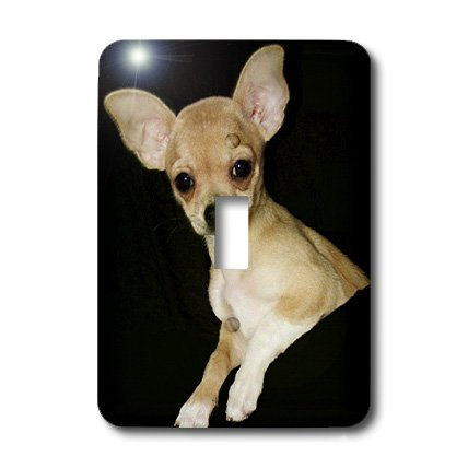 3dRose lsp_49302_1 Beautiful Chihuahua Portrait Single Toggle Switch