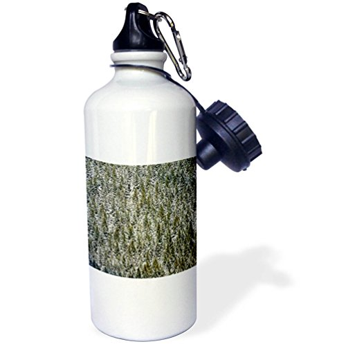 3dRose Danita Delimont - Forests - Evergreen trees on mountain slope, Crystal Lake, Ouray, Colorado - 21 oz Sports Water Bottle (wb_278686_1) by 3dRose