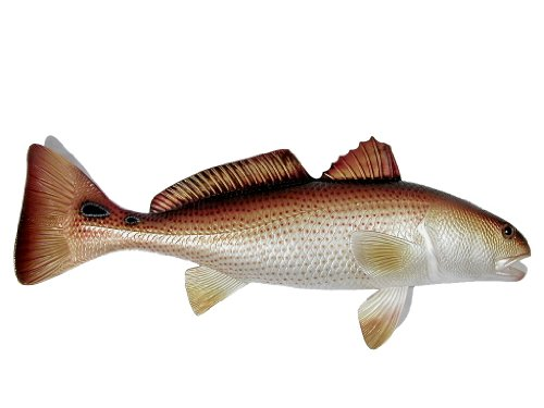 (LX Jumbo Handpainted Red Drum Fish Wall Mount Decor Plaque Saltwater Game Fish Replica)