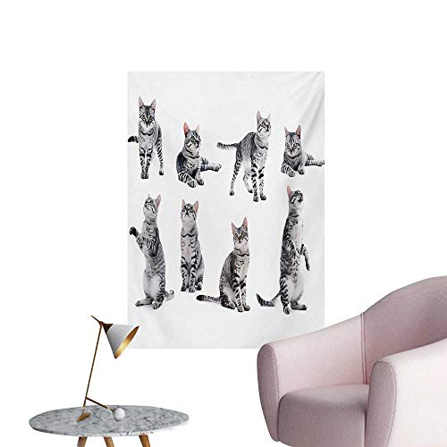 Anzhutwelve Cat Photo Wall Paper Collage of a Cute Inquisitive Striped Shorthair Furry Playful Pussy Posing Art PrintGrey White W20 xL28 The Office - Collage Maiden