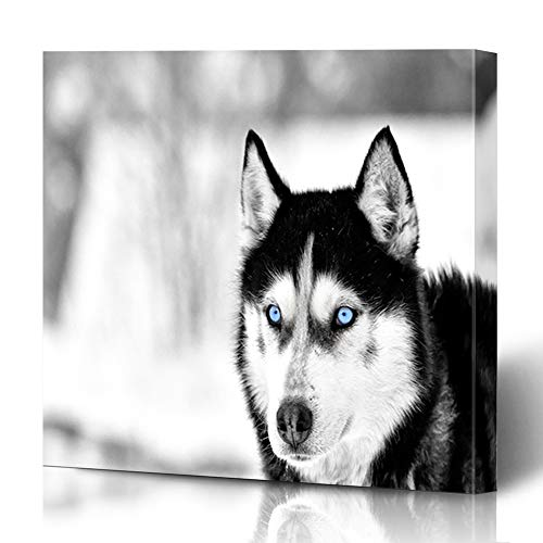 Husky Dog Art - Ahawoso Canvas Print Wall Art 16x16 Inch Relax Blue Face Siberian Husky Dog Winter Adorable Alaskan Arctic Black Modern Modern Artwork Printing Home Decor Wrapp Gallery Painting